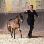 American Shetland Pony © Linn Lemmeke