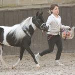 American Miniature Horse © Linn Lemmeke